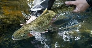 Why Catch and Release is important?